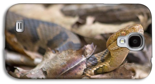 Copperhead In The Wild Galaxy S4 Case by Betsy Knapp