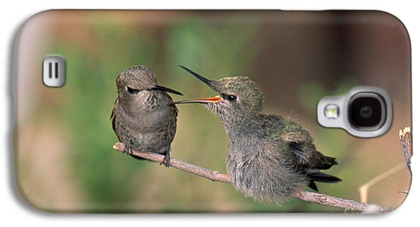 Costas Hummingbird Feeding Young Galaxy S4 Case by Anthony Mercieca
