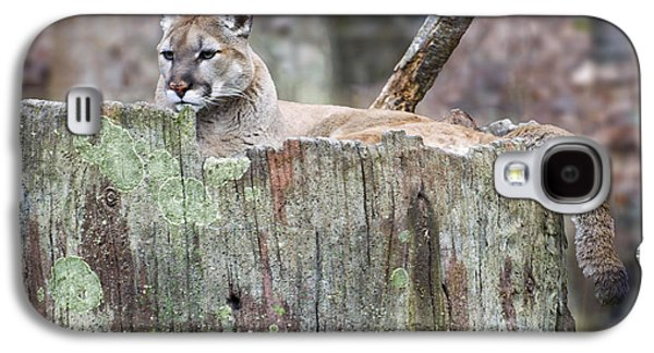 Cougar On A Stump Galaxy S4 Case