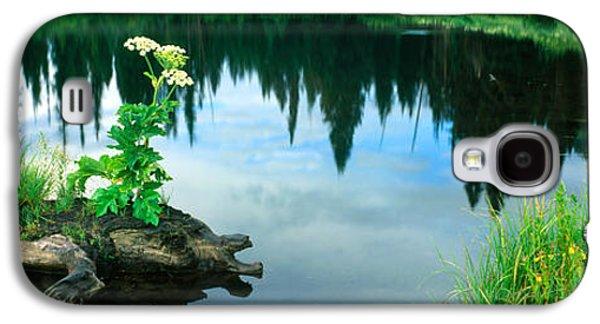 Cow Parsnip Heracleum Maximum Flowers Galaxy S4 Case