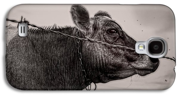 Cow With Flies Galaxy S4 Case
