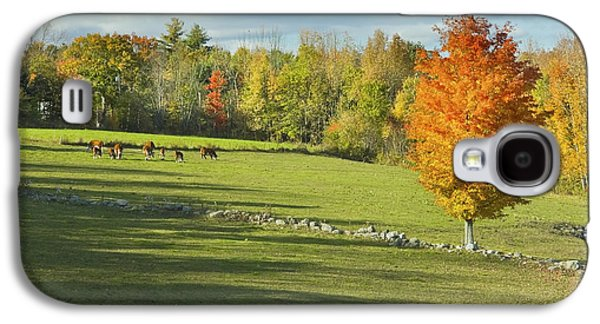 Cows Grazing On Maine Farm Field In Fall  Galaxy S4 Case by Keith Webber Jr