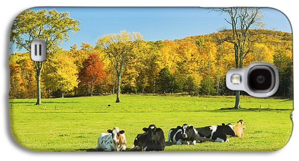 Maine Meadow Galaxy S4 Cases - Cows Resting On Grass In Farm Field Autumn Maine Photograph Galaxy S4 Case by Keith Webber Jr