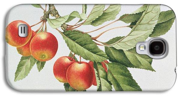 Crab Apples Galaxy S4 Case by Sally Crosthwaite