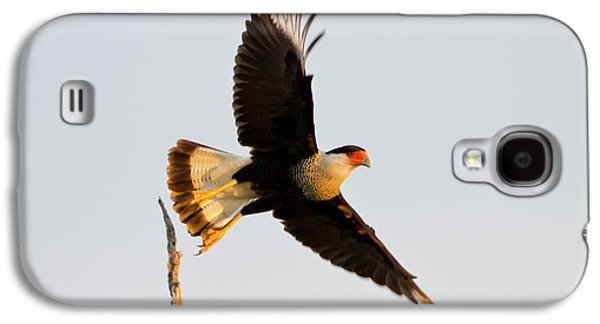 Crested Caracara (caricara Cheriway Galaxy S4 Case by Larry Ditto