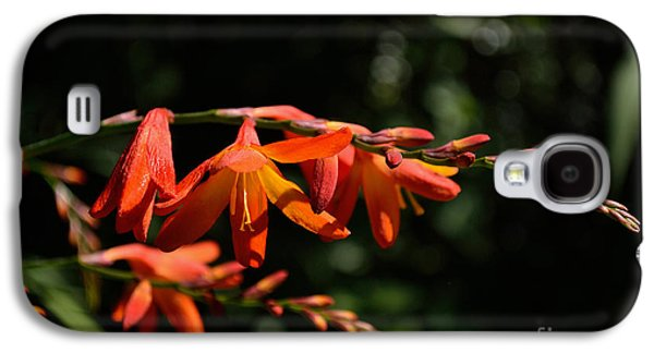 Crocosmia 'dusky Maiden' Flowers Galaxy S4 Case