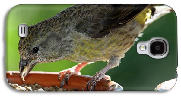 Crossbill Galaxy S4 Case - Crossbill Loxia Curvirostra Female by David Santiago Garcia