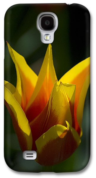 Galaxy S4 Case featuring the photograph Crown Tulip by Yulia Kazansky