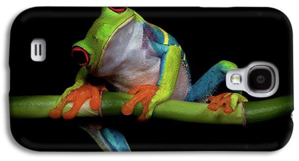 Frogs Galaxy S4 Case - Curiosity by Ferdinando Valverde