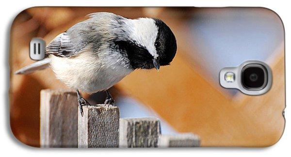 Curious Chickadee Galaxy S4 Case by Christina Rollo