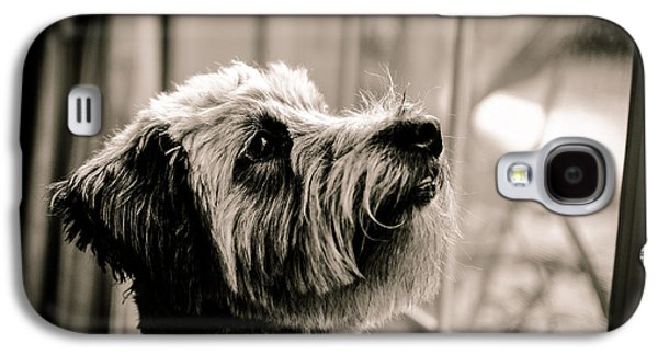 Curious Schnoodle Galaxy S4 Case by Jon Woodhams