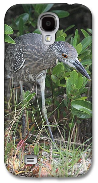 Curiously Night Heron Chick Galaxy S4 Case