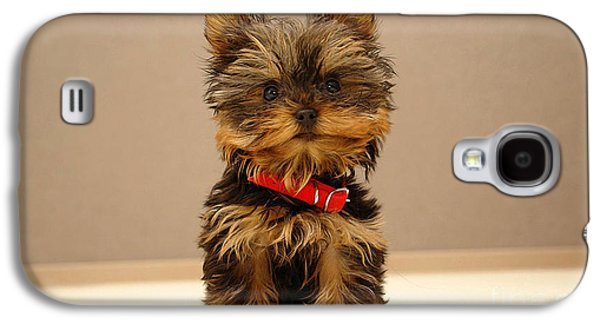 Cute Terrier Puppy Galaxy S4 Case by Marvin Blaine