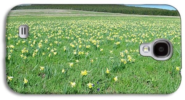 Daffodil Flowers In A Field, Les Galaxy S4 Case