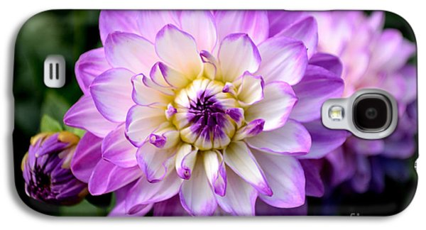 Dahlia Flower With Purple Tips Galaxy S4 Case