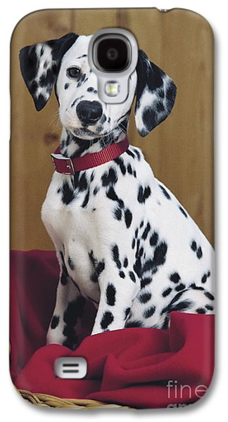 Dalmatian In Basket A108 Galaxy S4 Case by Greg Cuddiford