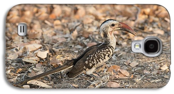 Damara Red-billed Hornbill Foraging Galaxy S4 Case by Tony Camacho