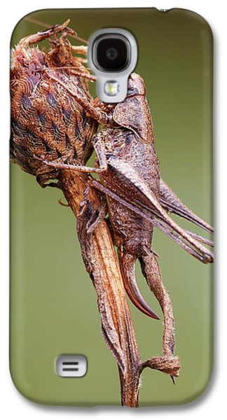 Dark Bush Cricket Galaxy S4 Case by Heath Mcdonald