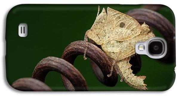Dead Leaf Grasshopper Nymph Galaxy S4 Case by Melvyn Yeo