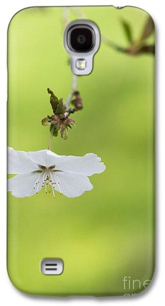 Delicate  Galaxy S4 Case