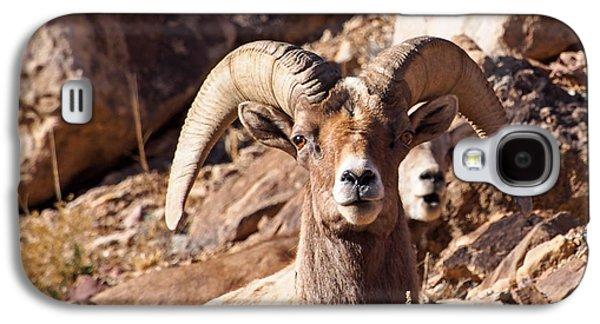 Desert Bighorn Sheep Galaxy S4 Case