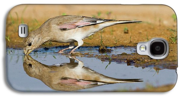 Desert Finch (carduelis Obsoleta) Galaxy S4 Case by Photostock-israel