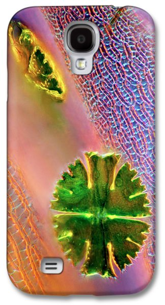 Desmids And Sphagnum Moss Galaxy S4 Case by Marek Mis