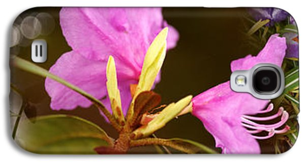 Details Of Early Spring Flowers Galaxy S4 Case by Panoramic Images
