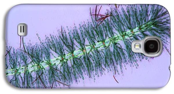 Diatoms On Red Algae Galaxy S4 Case by Marek Mis