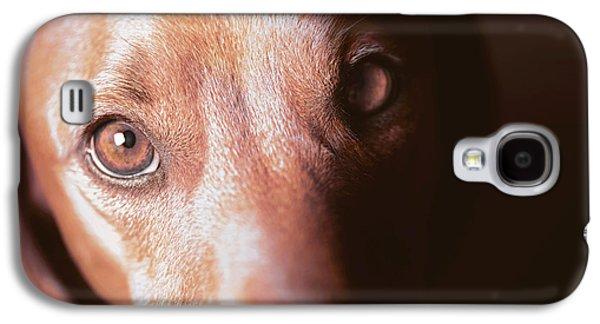 Dog Looking Towards Camera Galaxy S4 Case