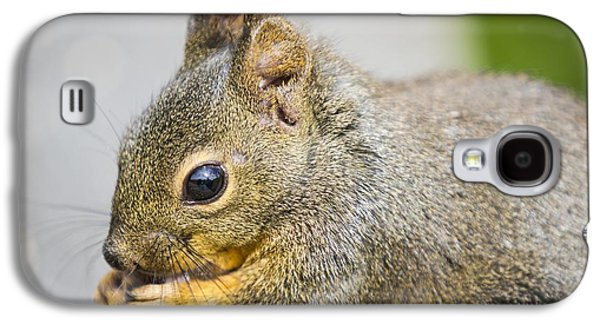 Douglas Squirrel  Galaxy S4 Case