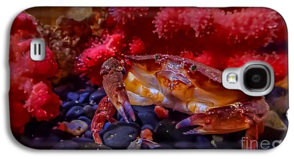 Dungeness Crab Galaxy S4 Case