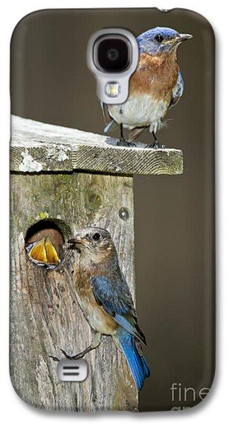 Eastern Bluebird Family Galaxy S4 Case by Anthony Mercieca