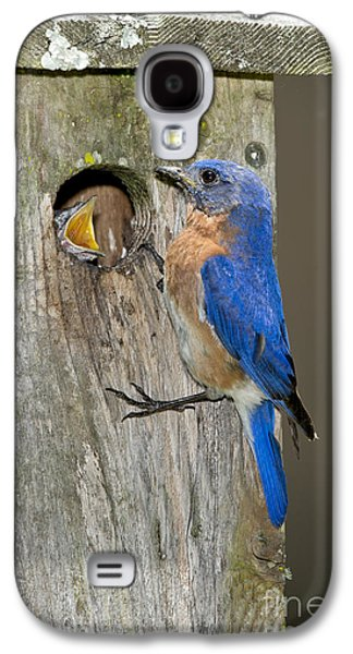 Eastern Bluebirds Galaxy S4 Case by Anthony Mercieca