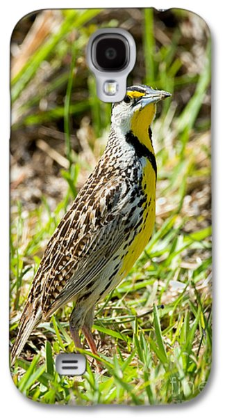 Eastern Meadowlark Galaxy S4 Case by Anthony Mercieca