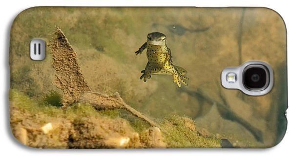 Eastern Newt In A Shallow Pool Of Water Galaxy S4 Case