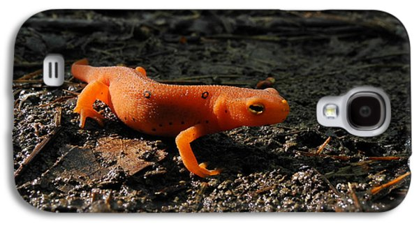 Eastern Newt Red Eft Galaxy S4 Case