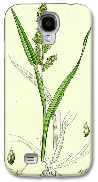 Echinochloa Crus-galli Loose Panic-grass Galaxy S4 Case