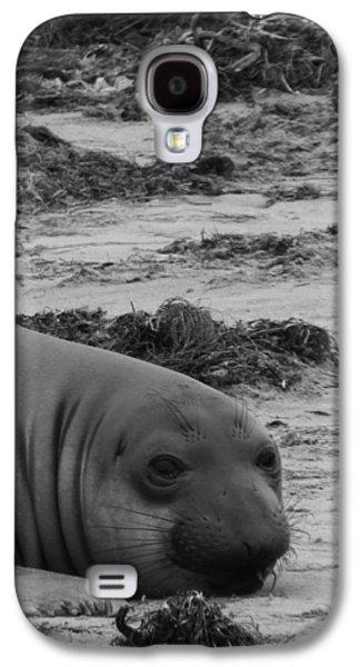 Elephant Seal Conteplation Galaxy S4 Case by Gwendolyn Barnhart