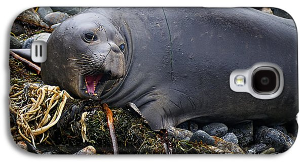 Elephant Seal Of Ano Nuevo State Reserve Galaxy S4 Case by Priscilla Burgers