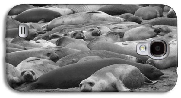 Elephant Seal Sea Galaxy S4 Case by Gwendolyn Barnhart
