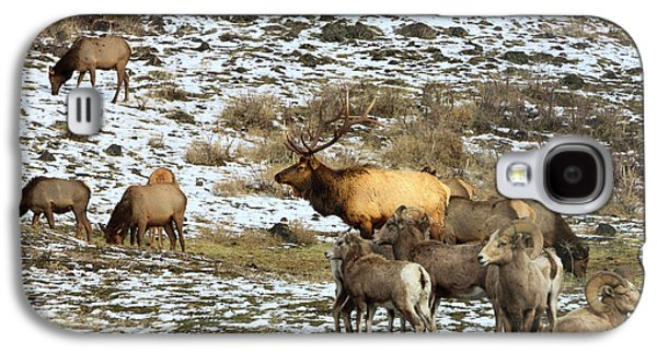 Elk With Big Horn Sheep, Oak Creek Galaxy S4 Case by Tom Norring