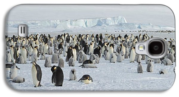 Emperor Penguins Aptenodytes Forsteri Galaxy S4 Case by Panoramic Images