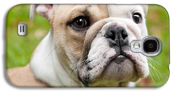 English Bulldog Puppy Galaxy S4 Case by Natalie Kinnear