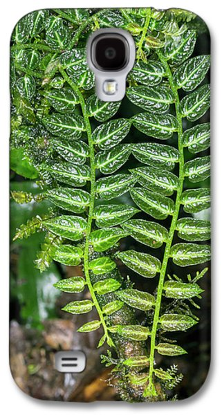 Epiphyte On A Rainforest Tree Galaxy S4 Case