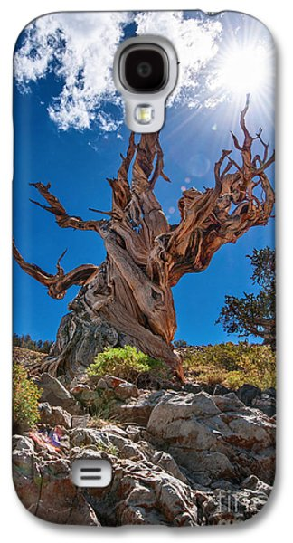 Eternity - Dramatic View Of The Ancient Bristlecone Pine Tree With Sun Burst. Galaxy S4 Case by Jamie Pham