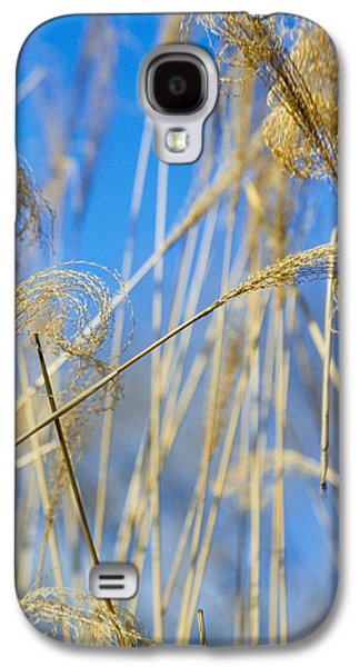 Eulalia Grass Native To East Asia Galaxy S4 Case by Anonymous