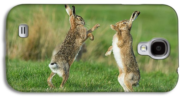 European Hares In March Galaxy S4 Case by Dr P. Marazzi