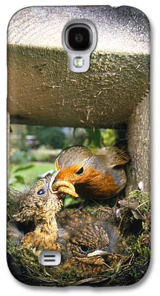 European Robin And Chicks Galaxy S4 Case by John Daniels