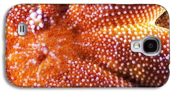 European Starfish Mouth Shetland Galaxy S4 Case by Matt Doggett